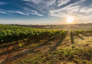 Franciacorta Docg: il vino che racconta una storia