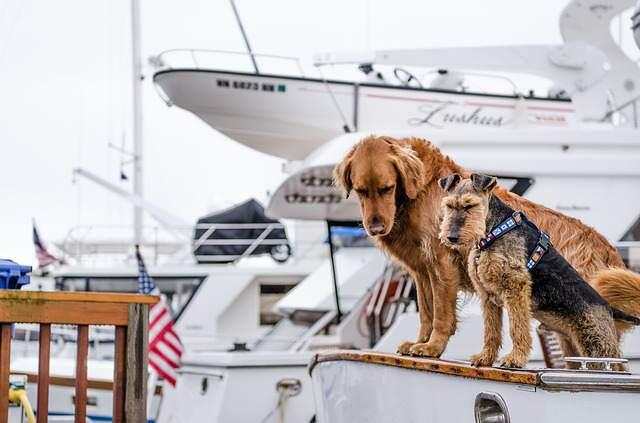 Trasportini per cani, guida alla scelta